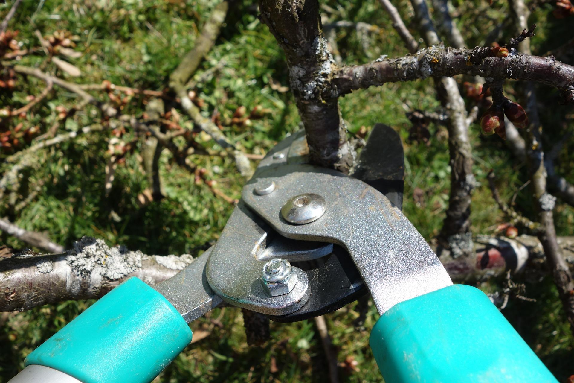 Pruning/Schneiden